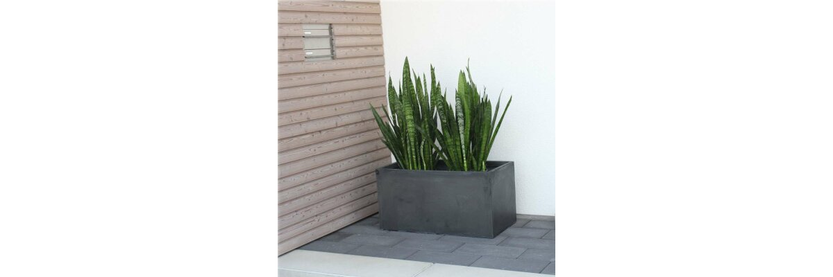 Which planter is right for you?  - Fibreglass, stainless steel and plastic planters await