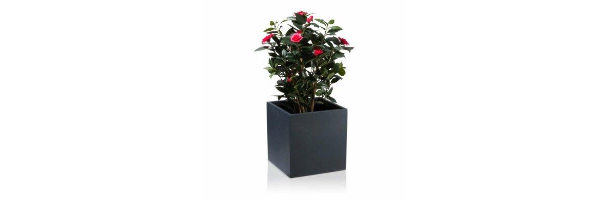 Product Review: Plant Pot CUBO 40 Fibreglass charcoal-grey matt - Product Review: Plant Pot CUBO 40 Fibreglass charcoal-grey matt