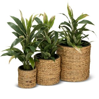 Set of 3 Flower Pots RENDONDO Water Hyacinth