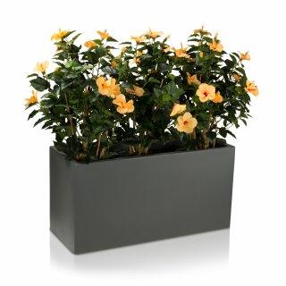 Plant Trough VISIO 50 Plastic basalt-grey matt