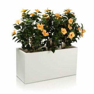 Plant Trough VISIO 50 Plastic white matt