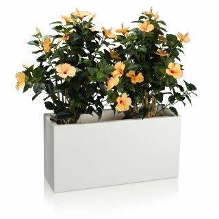 Plant Trough VISIO 40 Plastic white matt