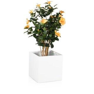 Planter CUBO 40 Fibreglass white matt
