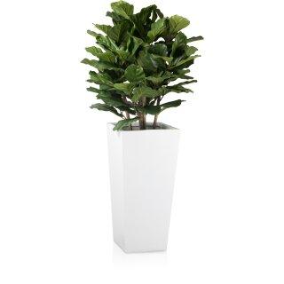 Planter LAVIA 70 Fibreglass white matt