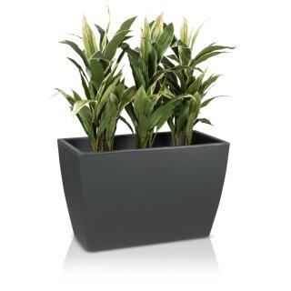 Plant Trough ARTESA 50 Plastic charcoal grey matt