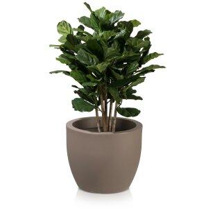 Plant Pot TARRO 43 Plastic cappuccino matt