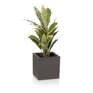 Plastic Planter CUBO 30 charcoal grey matt