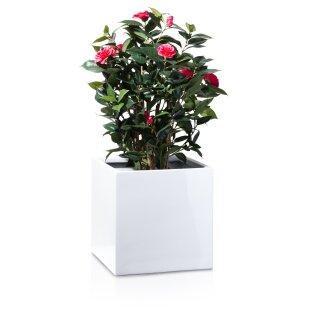 Planter CUBO 40 Fibreglass white glossy