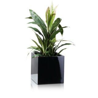 Planter CUBO 30 Fibreglass black glossy