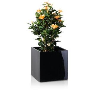 Planter CUBO 40 Fibreglass black glossy
