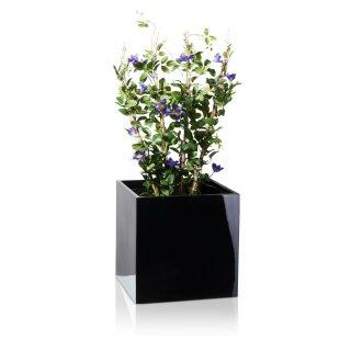 Plant Pot CUBO 50 Fibreglass black glossy