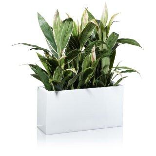 Plant Trough VISIO 30 Fibreglass white glossy