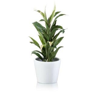 Flower Pot TERRA 25 Fibreglass white glossy
