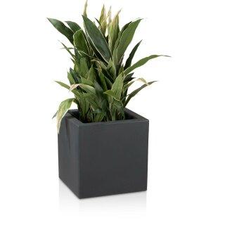 Plastic Planter CUBO 40 charcoal grey matt